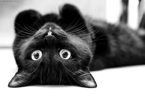 Mangiare nero micio Tumblr