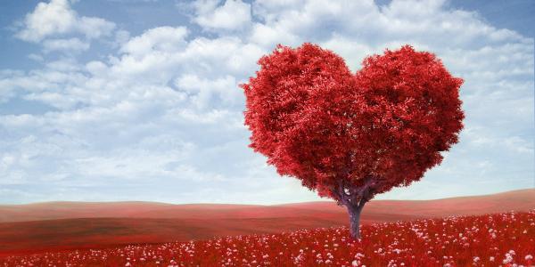 Auguri Di San Valentino Ecco Una Lista Infinita Di Frasi D Amore