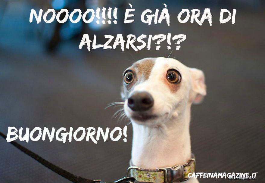 Dai un dolce buongiorno su whatsapp tantissime frasi for Buongiorno divertente sms