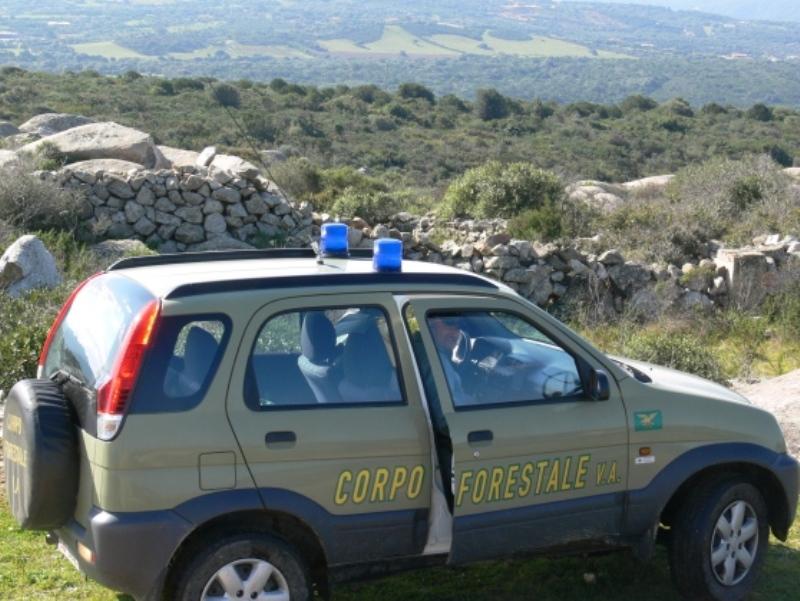 """""""Le ha sgozzate tutte"""". Choc in Sardegna dove un pastore ..."""