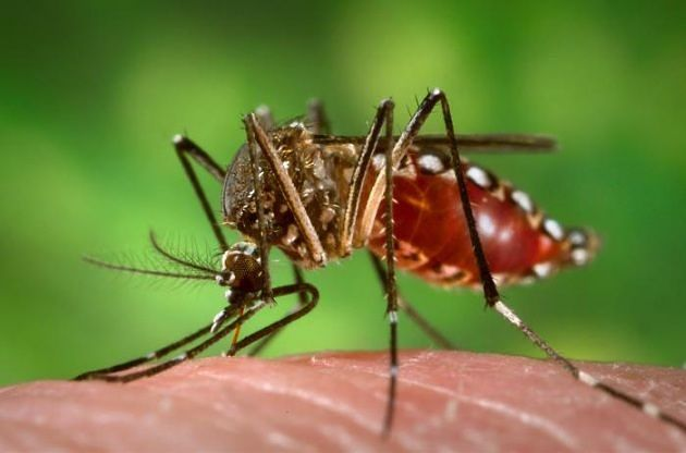 Zanzare, trovato finalmente il sistema per sterminarle (tutt