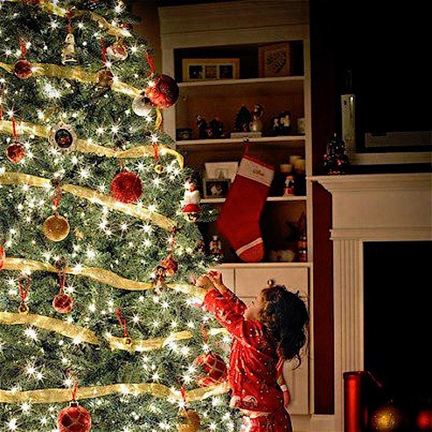 Immagini Di Natale On Tumblr.L Albero Di Natale Non Si Fa Cosi L Esperto Ci Illumina