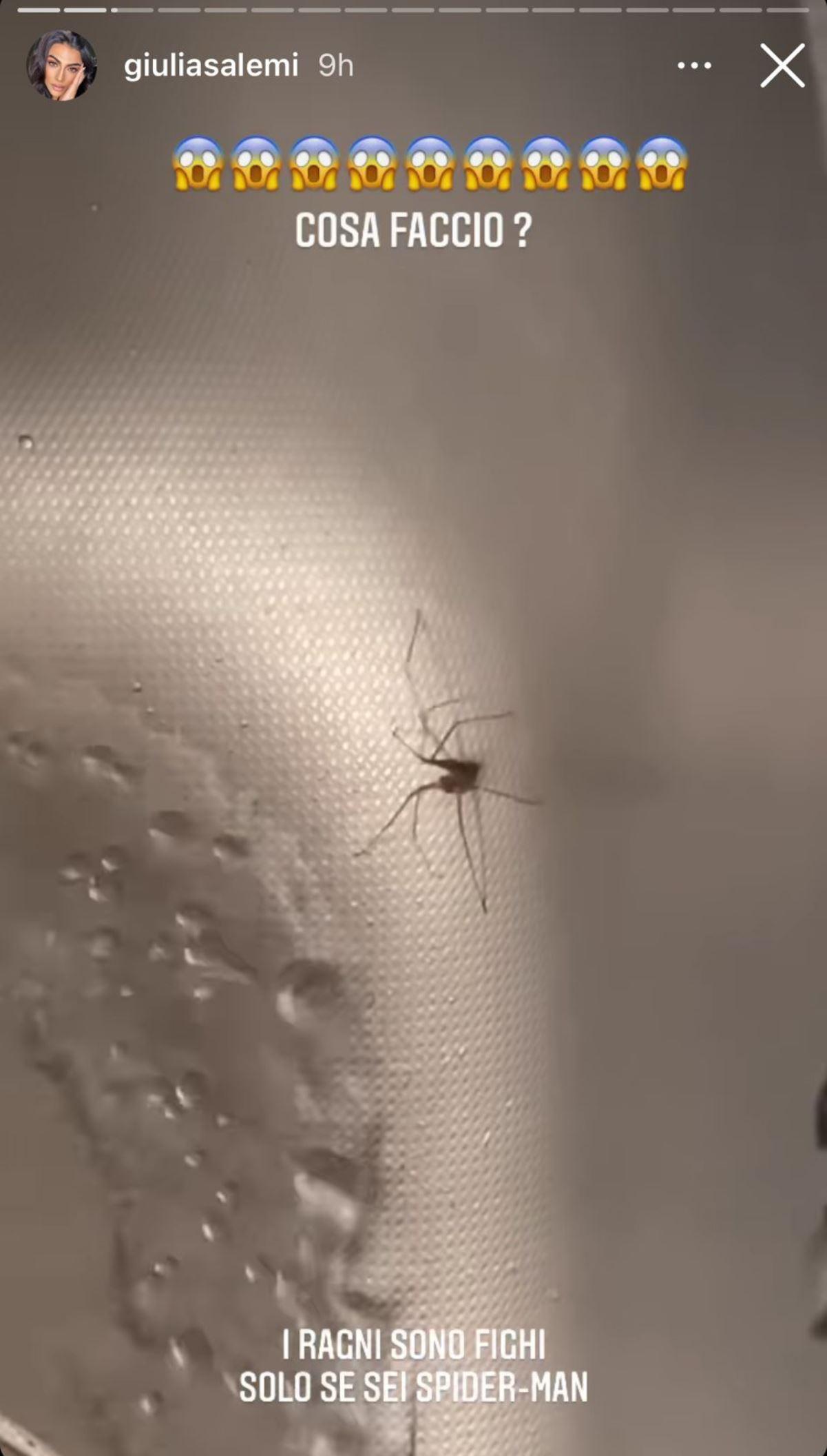 giulia salemi paura ragni