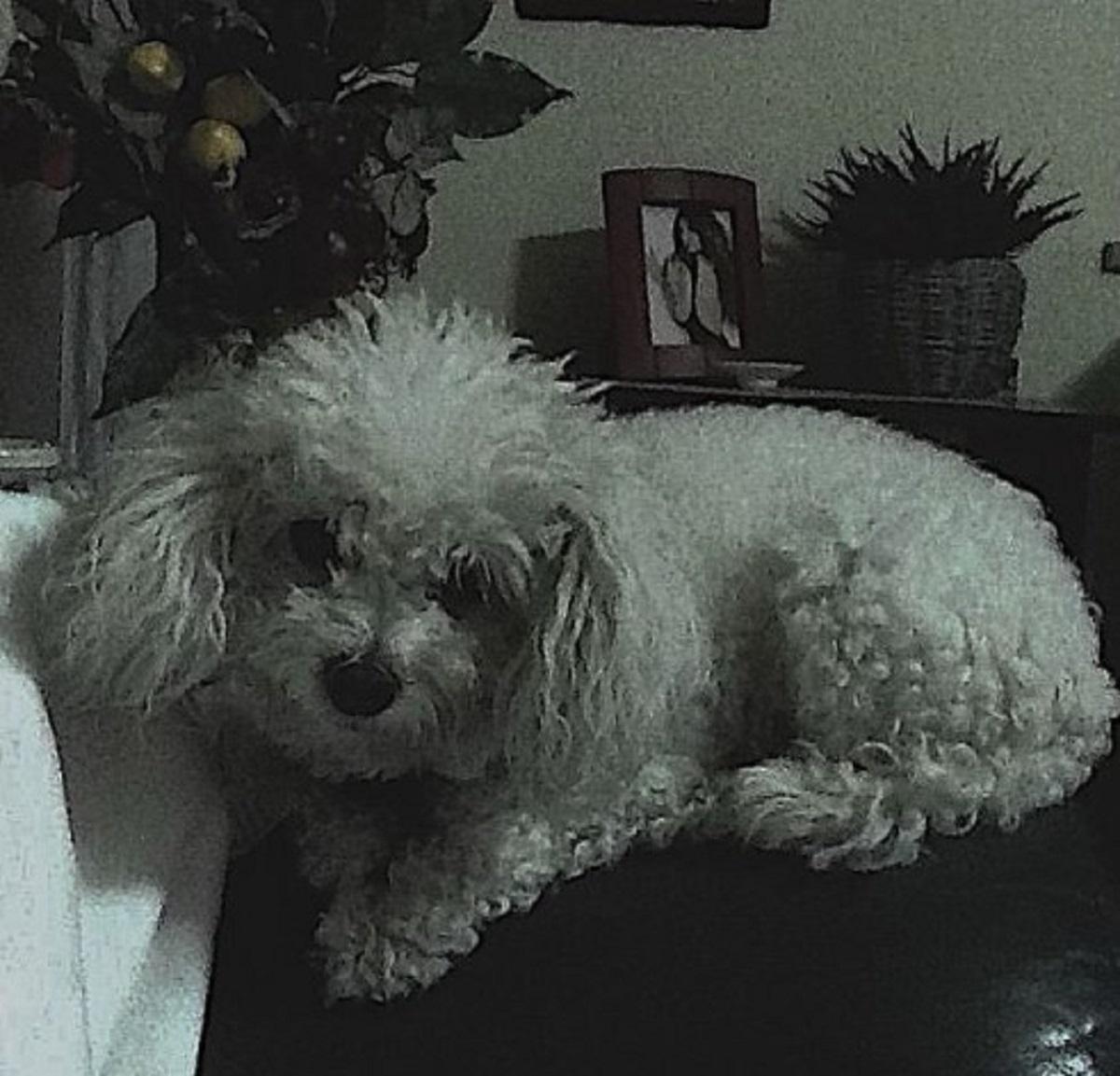 Roberta Morise triste annuncio addio cagnolina Leonessa