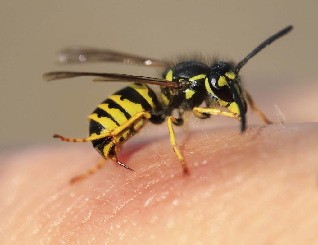 maurizio-zingarofalo-morto-ape