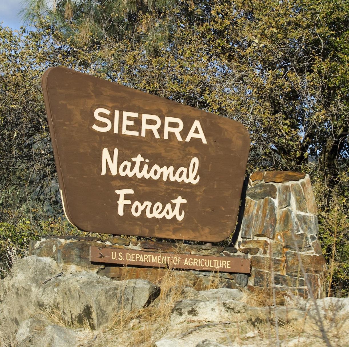 Sierra National Forest gerrish